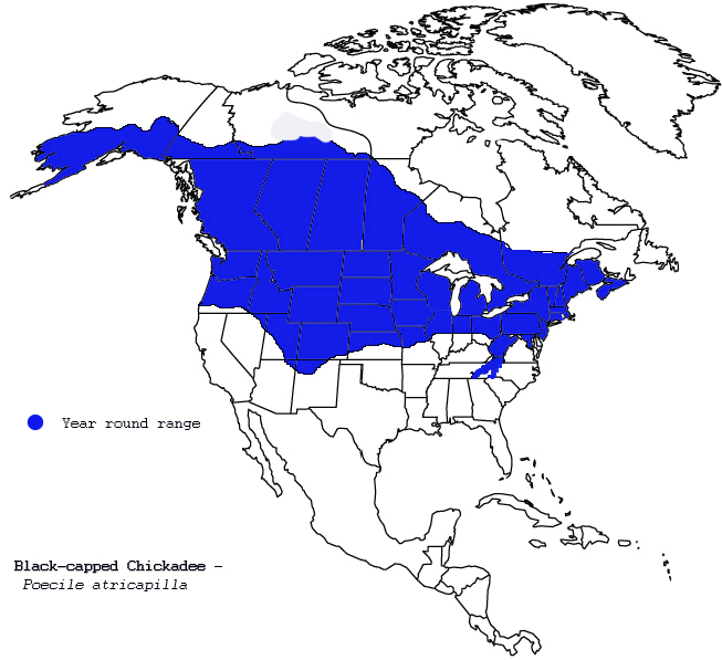 Areas of North America that the Black-capped Chickadee - Poecile atricapilla inhabits